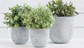 盆栽-Potted Plant